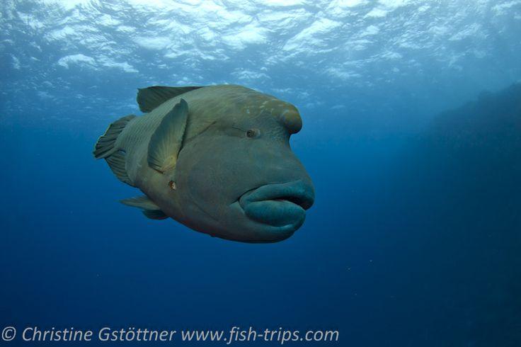 Tauchen in Ägypten,Hurghada - Tauchreisen und Abenteuerreisen mit Fish & Trips