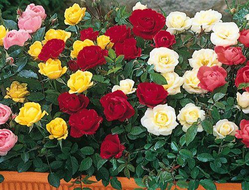 Τα λουλούδια θέλουν  φροντίδα πολύ  όμορφα για να μείνουν,  αλλιώς ο χρόνος που περνά...  γρήγορα θα τα σβήσει...