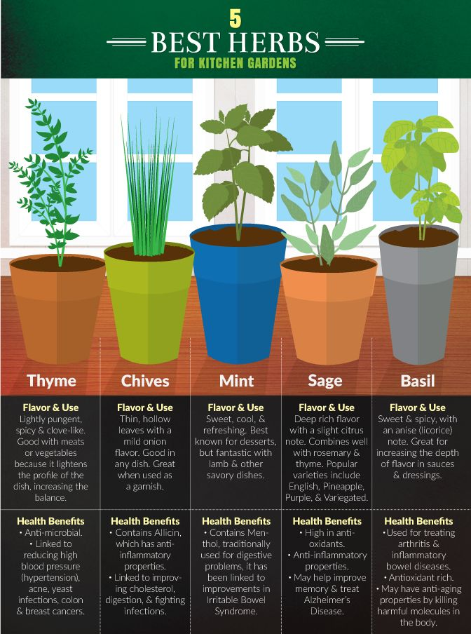 Are you starting a kitchen #garden in your home? These can be cared for regardless of the season. Here are the 5 best herbs to start you off, courtesy of our friends at fix.com!