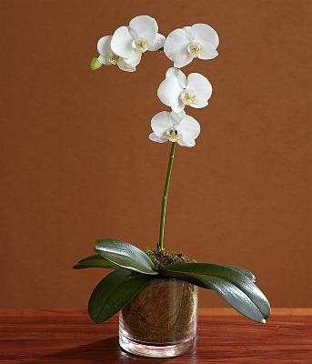 Simple Potted Orchid Centerpiece Tying The Knot Pinterest Glass Vase The Head And Head Tables