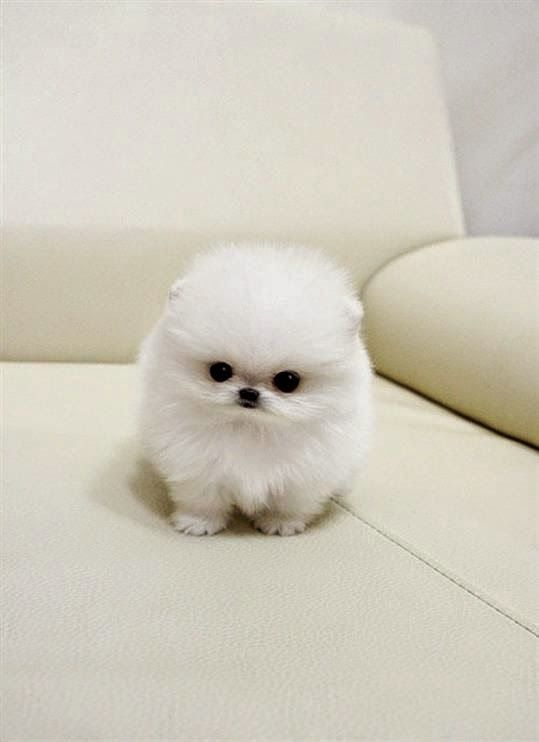 Top 5 Small Breed Dogs