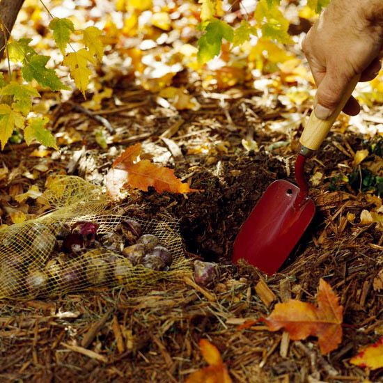 November gardening tips for the Pacific Northwest - what to plant, what to do, what to plan.