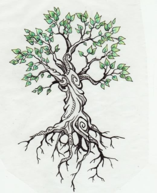 Best 25 olive tree tattoos ideas on pinterest greek for How to make an olive tree into a bonsai
