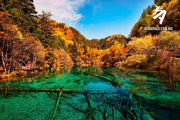 El Lago de las Cinco Flores es uno de los principales atractivos turísticos de la región china de Jiuzhaigou. Se enclava en un valle y destaca por el color turquesa de sus aguas.  Las aguas de este bello lago nos permiten comprender perfectamente el significado del término cristalino. Dada su gran transparencia nos permite observar con total nitidez en su lecho numerosas rocas y troncos de árboles caídos, a una profundidad de hasta 10 metros.