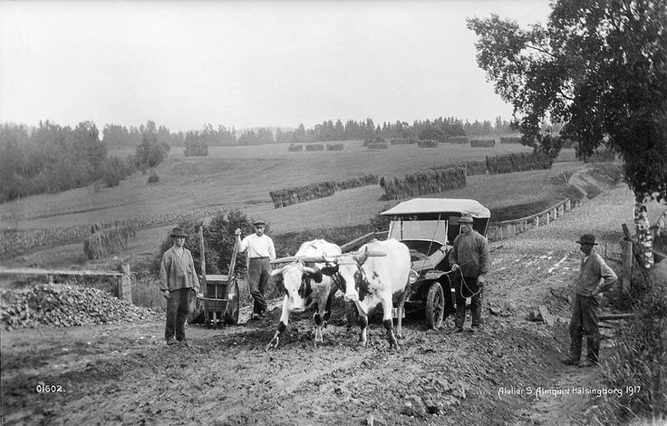 Oxen pulling a car, somewhere in Sweden. 1917.