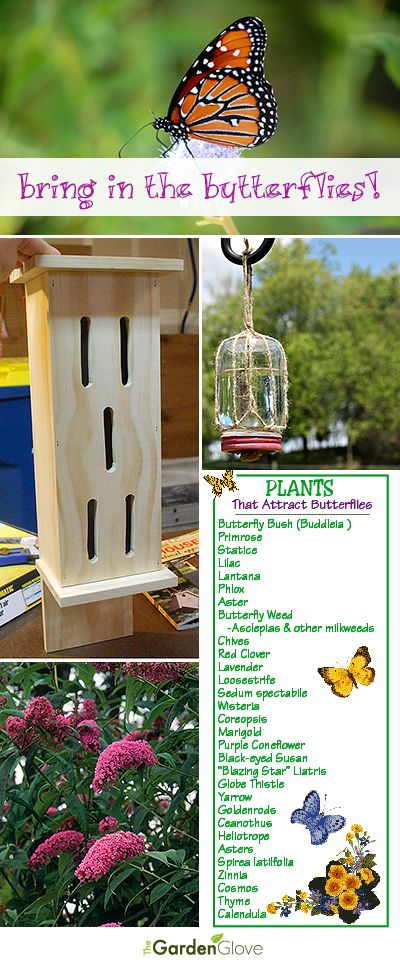 Bring in the Butterflies • Tips, Ideas, Projects and Tutorials on how to attract butterflies to your garden and yard!