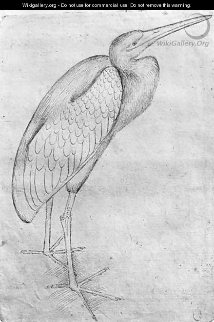 pelican by pisanello