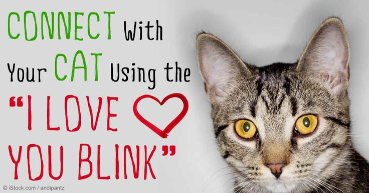 17 best ideas about animal activist on pinterest peta for Jackson galaxy cat mojo