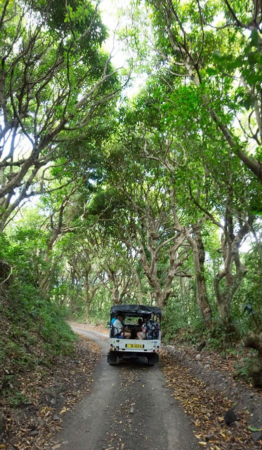 Go off-roading in St. Kitts.Country Roads, Dreams Vacations, Caribbean Travel, Caribbean Dreams, Cruises 2015, Caribbean International, Cruises Port, Caribbean Cruises, Buckets Lists 3