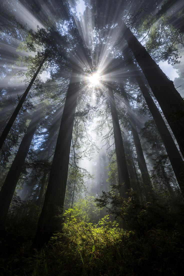 ~~Faerie Glade | Sunbeams and fog in the redwoods, Del Norte Coast Redwoods State Park, California | by Ian Plant~~