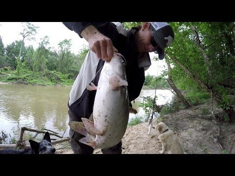 Bank Fishing For Catfish - Catching A Big Blue Catfish With Shad - (More info on: https://1-W-W.COM/fishing/bank-fishing-for-catfish-catching-a-big-blue-catfish-with-shad/)