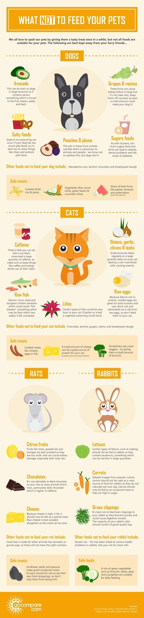 Infographic – What not to feed your pets