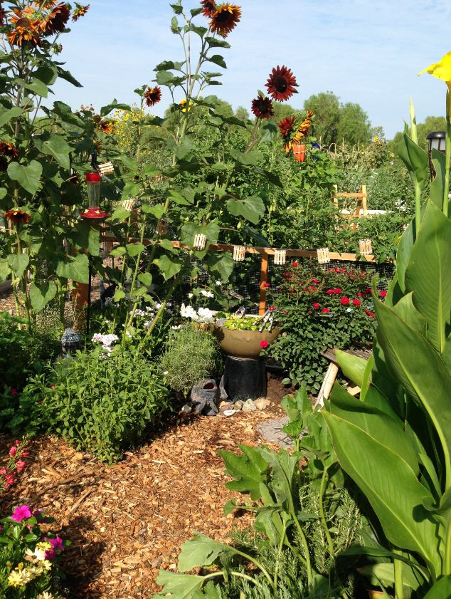 Go #green by joining the Community Gardens located at Central Park