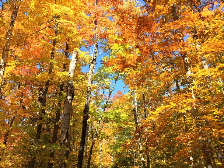 Algonquin Provincial Park, @Algonquin_PP, @OntarioParks, is an ideal place for #leafpeepers to admire the #fallcolors. Hike up one of its scenic trails or stop along Highway 60 for some picturesque views. #EpicColor