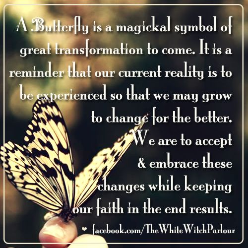 butterfly, transformation, enlightened, book of shadows, love and light, happiness, growth, spiritual, wicca, meaning, nature, magick, metaphysical, psychic, healing https://www.facebook.com/TheWhiteWitchParlour