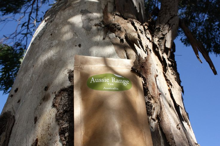 We are looking for honest reviews from anyone who has already tried Synergy by Aussie Range Tea Australia.