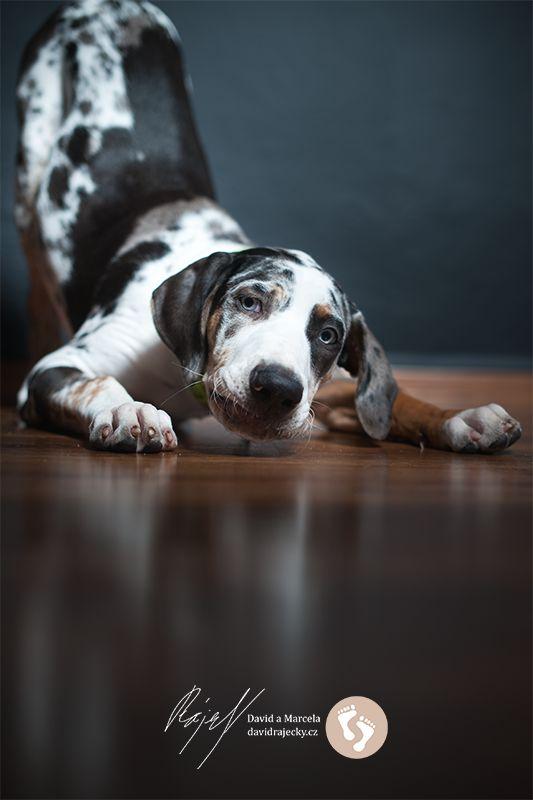 Jacksboro, louisian leopard dog
