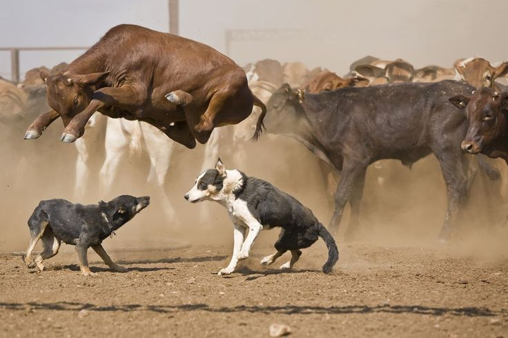 What goes up! Photo by David Darcy -- National Geographic Your Shot