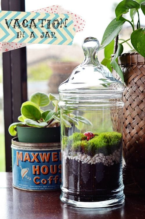 DIY Terrarium: Golden Afternoon, In A Jars, Projects Ideas, Diy Terrarium, Cool Ideas, Moss Terrarium, Succulent Terrarium, Gardens Stuff, Apothecaries Jars