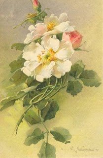 Light pink & white old-fashioned roses by C. Klein