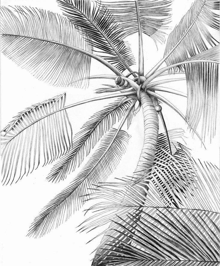 Palm Leaf Coloring Page Lovely Palm Tree Coloring Sheets Palm Tree Drawing Palm Tree Sketch Palm Trees Painting