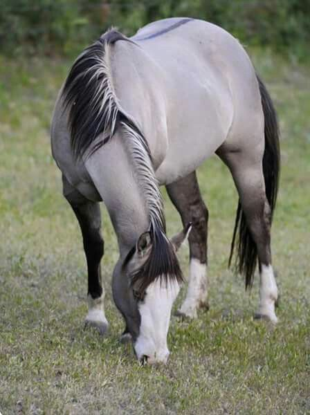 Have you seen such a beautiful color on a horse before?   Awesome.