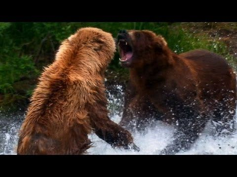 Scary animal attack pictures - photo#30