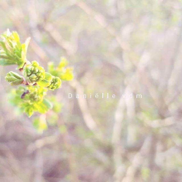 🌿 . . . #macro_igers #macrophotography #macrolove #naturelovers #naturegram #instanature #landscape #nature_perfection #naturephotography #ig_holland #instanetherlands #igersholland #holland_photos #beautiful #wanderlust #mobile_photography3 #super_holland #sunset #travelgram