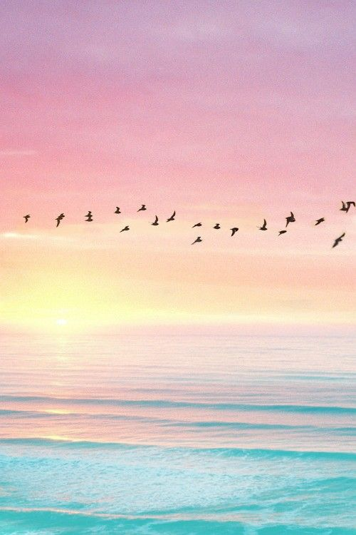 Flock Of Birds Turquoise Waters And Pink Sunset Sky Beautiful Pastel Landscape