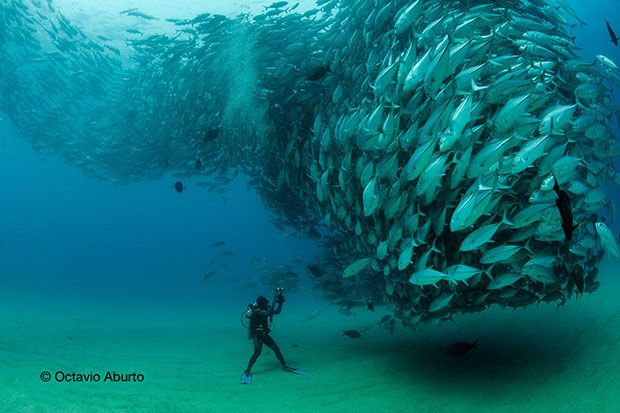 David and Goliath: A Photo and Video of an Underwater Tornado of Fish - PetaPixel