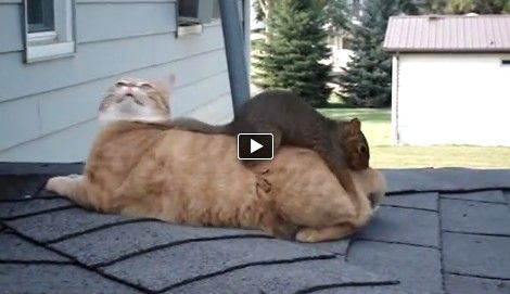 Now this is a weird friendship � domestic cat and a squirrel. Although this kind of friendship is really rare these two look like they really enjoy the time they spend together. They play and they run around like they know each other for their whole lives.