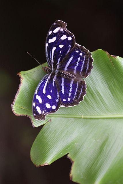 Butterfly  via Diana Fensome