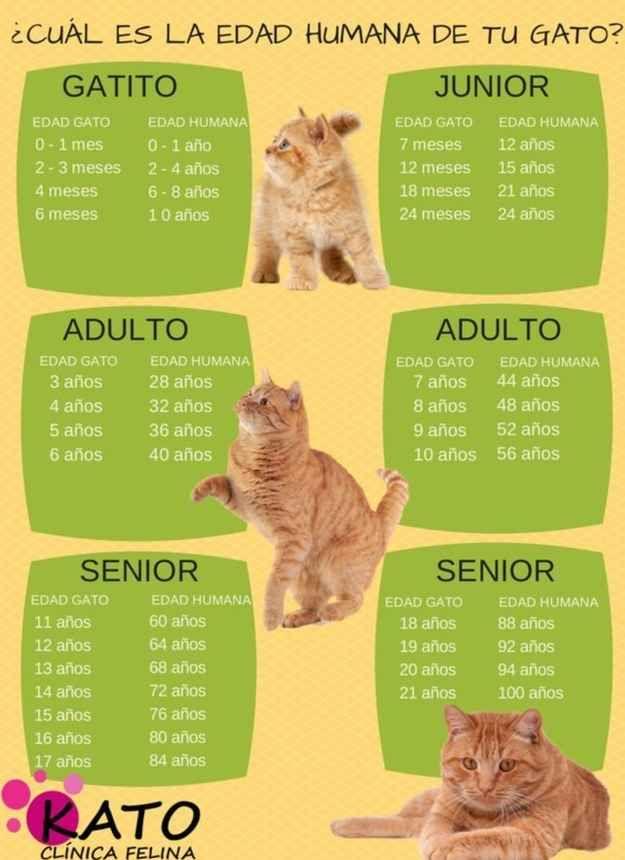 La edad humana de tu mascota varía dependiendo de en qué etapa de su vida esté: