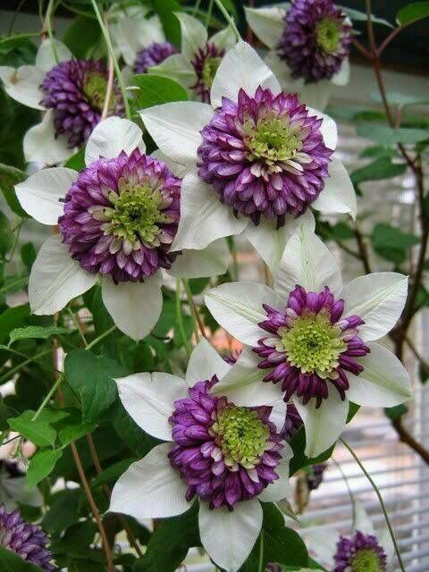 74 best pflanzen images on Pinterest Gardening, Planting flowers - gartenpflanzen winterhart immergrun