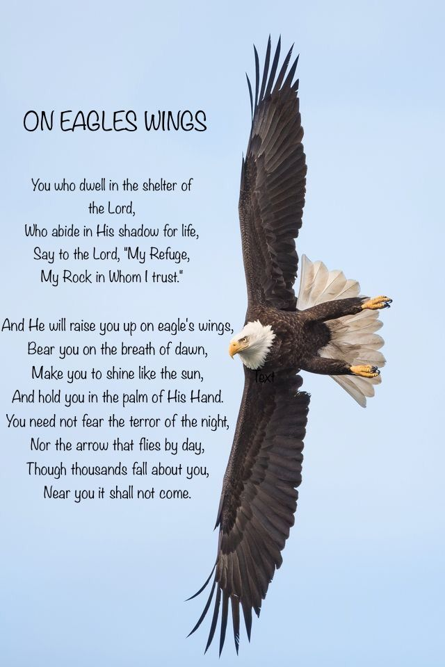 eagles wings eagle bald uploaded user prayer sayings