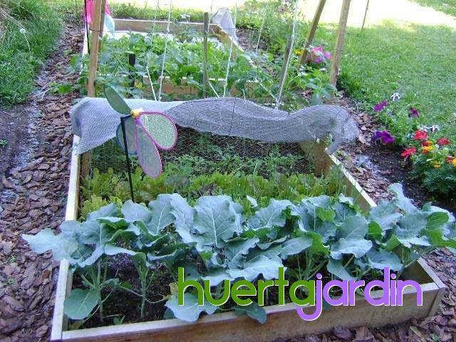Que cultivos que se pueden sembrar mes a mes y Asociaciones de cultivos favorables