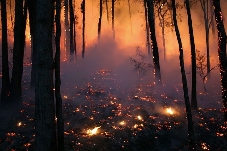 Taken very early in the morning at a wildfire/bushfire. Canon 400d  by Roger Rosentreter on yourshot.nationalgeographic.com