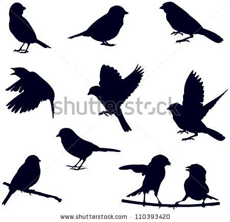 Vector Silhouettes Of Birds, Sparrows In Different Poses/ Bird Silhouettes - 110393420 : Shutterstock