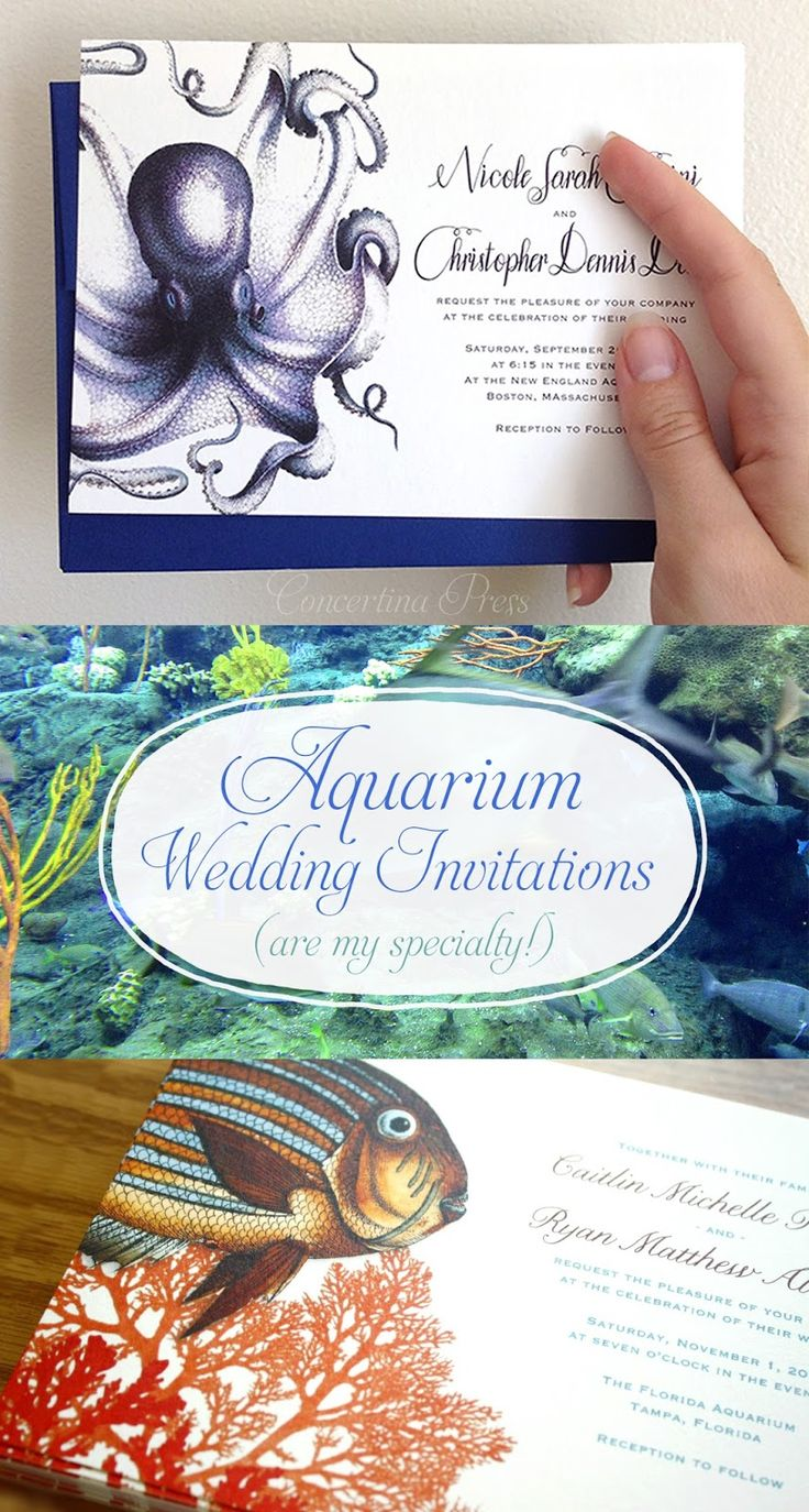 Aquarium Wedding Invitations from Concertina Press