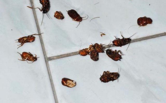 Ecco come eliminare gli scarafaggi da casa con metodi naturali #scatafaggi #eliminare #casa #blatte