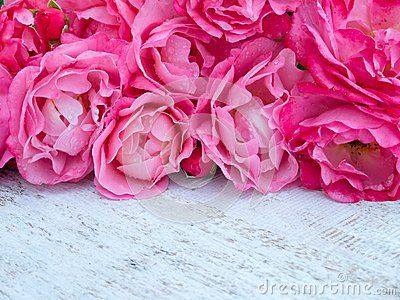 Pink curly roses bouquet on the rustic white painted background