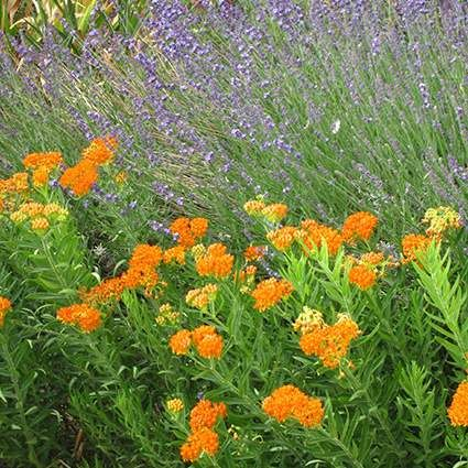 My Favorite Plant Combinations | High Country Gardens  - The High Country Gardens Blog