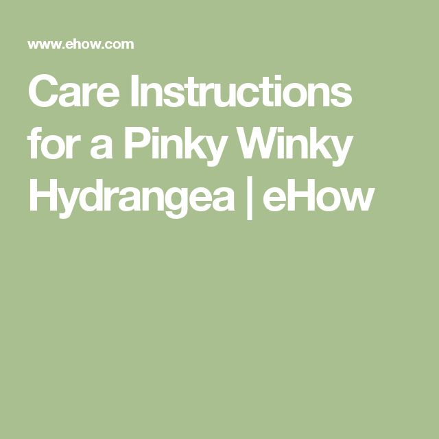Care Instructions for a Pinky Winky Hydrangea | eHow