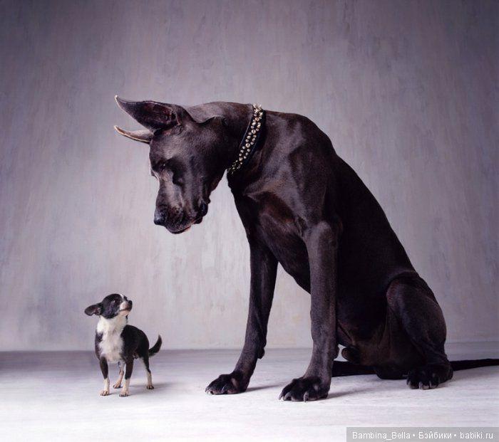 Немецкие доги - Аполлоны среди собак / Болталка / Бэйбики. Куклы фото. Одежда для кукол