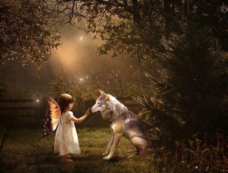 Little fairy wolf