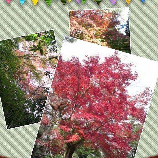 伊賀市の上野公園の紅葉写真を見せてもらいました🍁  #東亜和裁#東亜和裁紅葉まつり2016 #紅葉#三重県#伊賀市#上野公園
