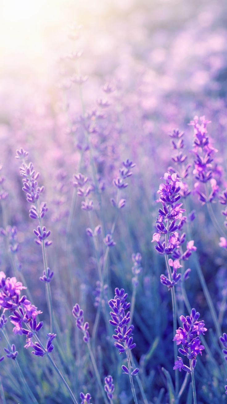 Most Recent Pics Purple Flowers Aesthetic Concepts Purple Flowers Are The Nearly All In 2021 Flowers Photography Wallpaper Purple Flowers Wallpaper Flowers Photography Amazing light purple flower wallpaper