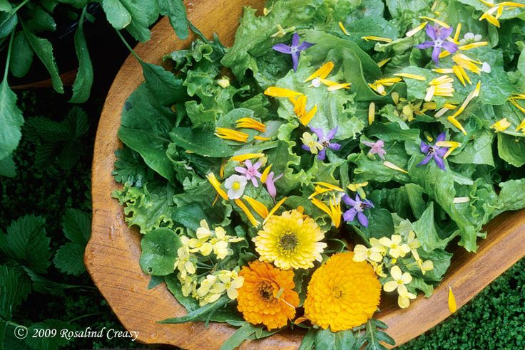 growing edible flowers: Gardens Celebration Salad, Flowers Gardens, Growing Edible, Edible Gardens, Edible Landscape, Gardens Celebrity Salad, Calendula Petals, Landscape Blog, Edible Flowers