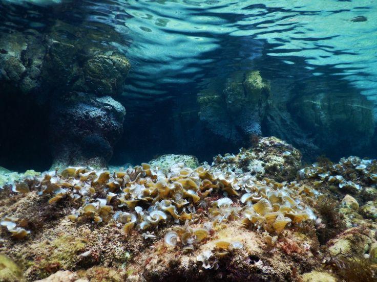 Glavotok - Croatia - Adriatic Sea  Photo was taken by Anett Szaszi with a Nikon Coolpix Aw120 camera.    Read the camera review here:    http://snorkelaroundtheworld.com/2015/10/waterproof-compact/