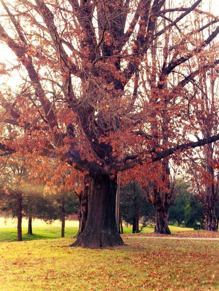 Jubilee Park, Winter
